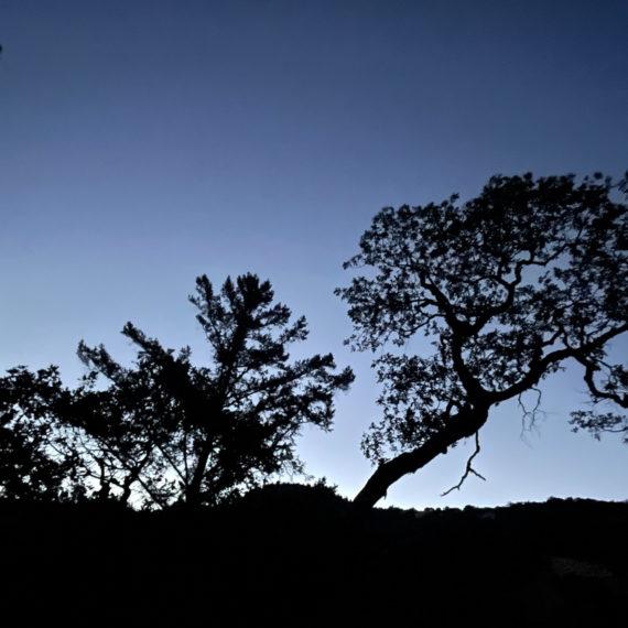 Trees against the last remants of sun against a deep blue evening sky