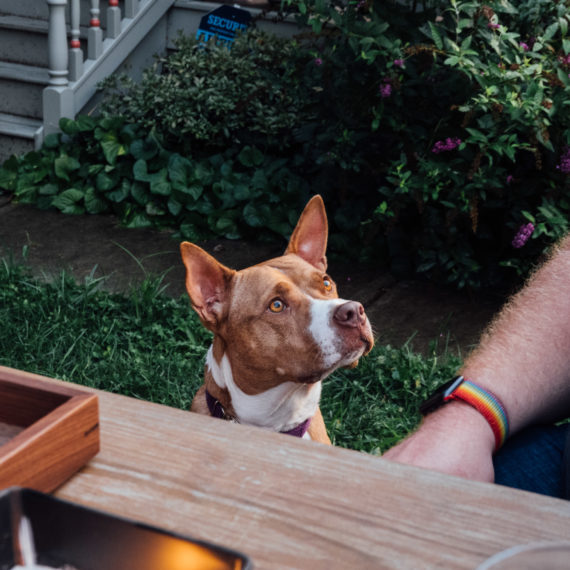 A dog looks attentively at a human