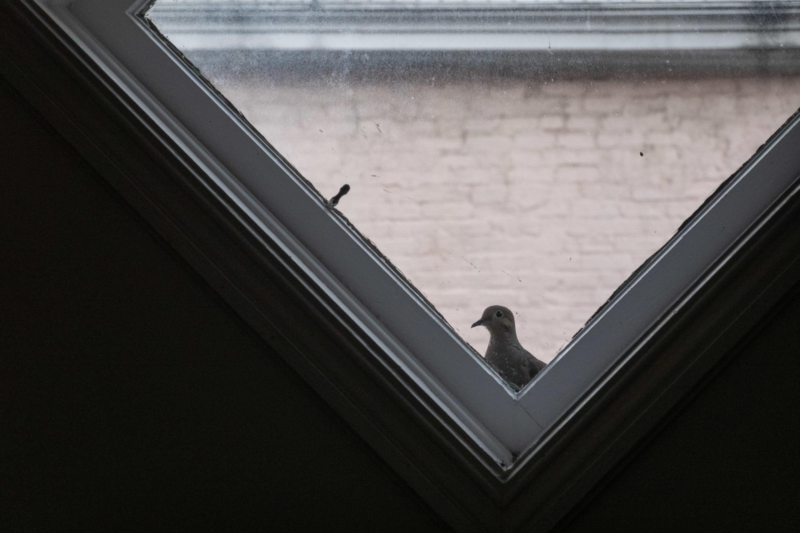 A dove looks through a diamond shaped window