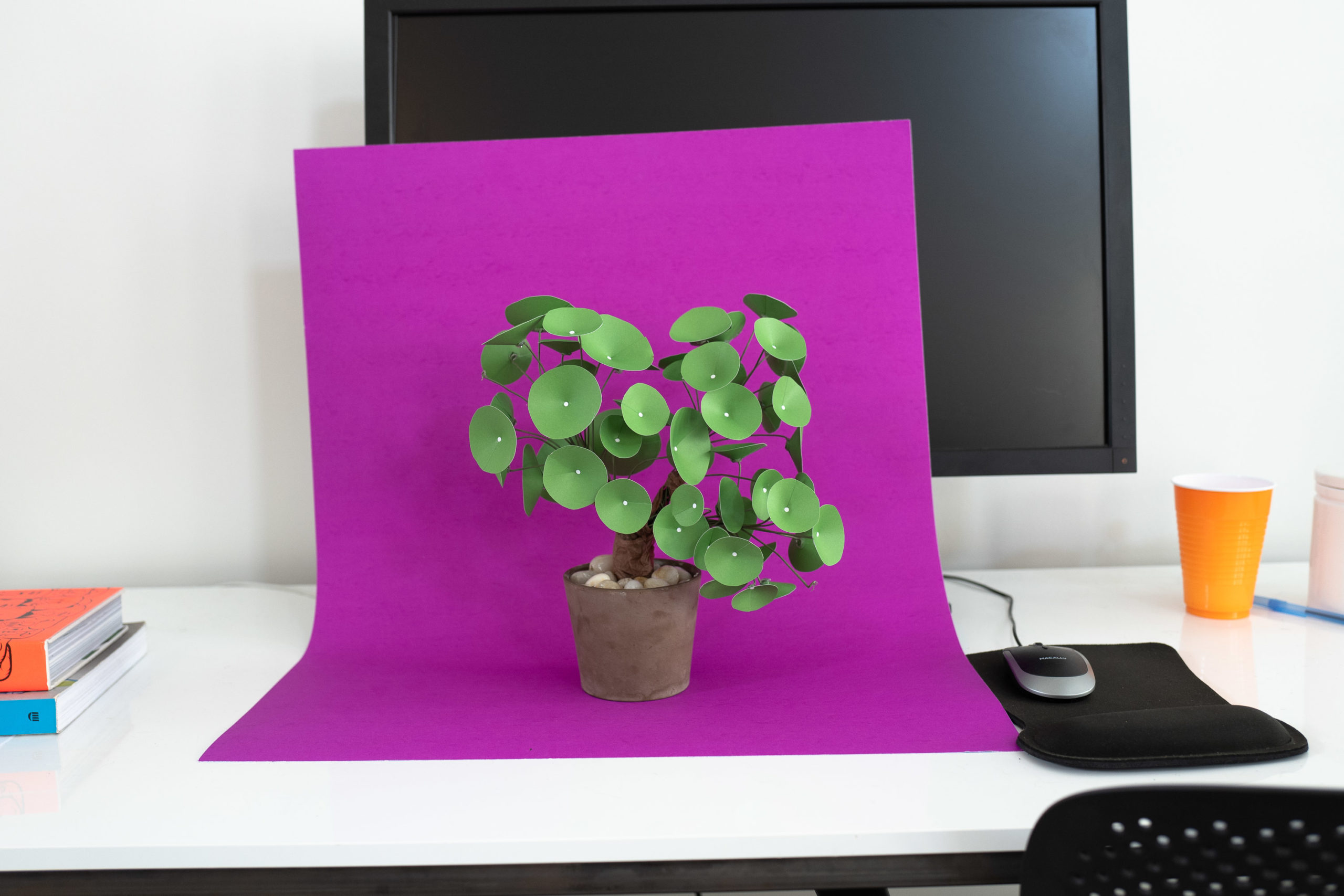 A paper plant on a bright magenta sheet of poster board