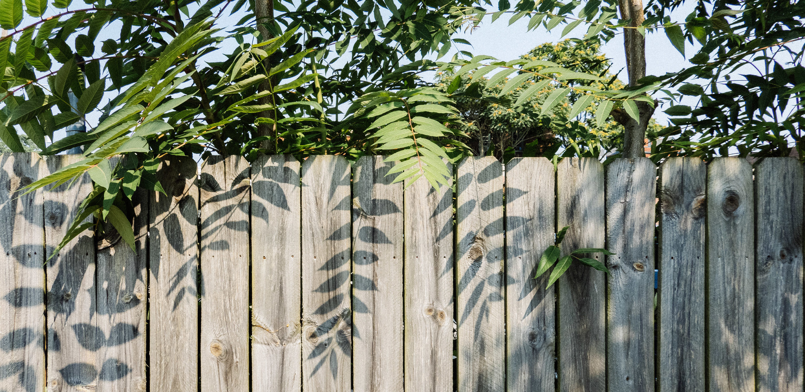 Leaves cast shadows on a wooden fence