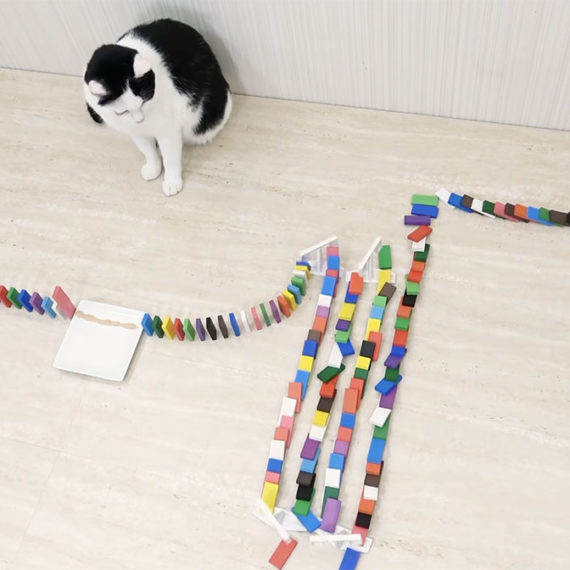 A catch watches colorful dominos fall over