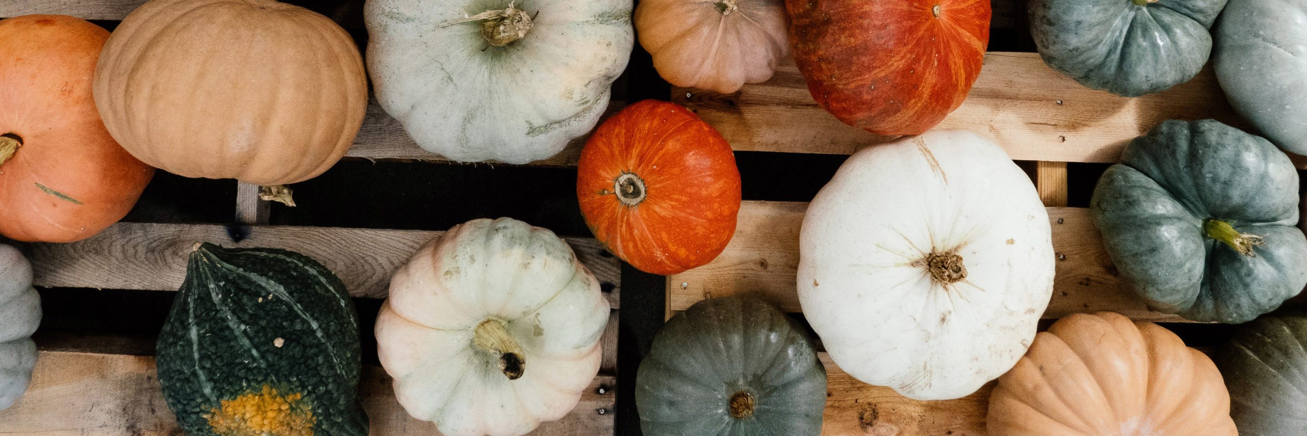 Various shapes and colors of pumpkins